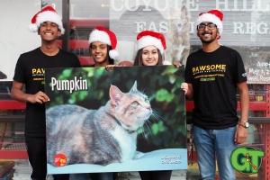 Merry Christmas Pet Food Express